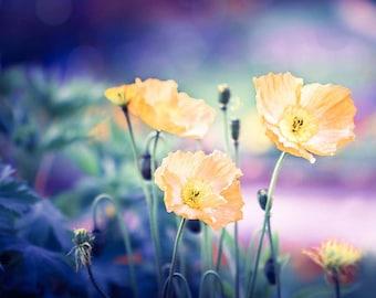 flower photography botanical print nature photography floral 8x10 8x12 fine art photography yellow flowers print poppy bedroom decor purple