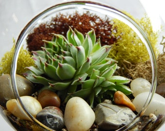 """Succulent Terrarium Kit with Moss and River Rocks / 4"""" Round or 7"""" Teardrop Glass"""