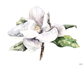 "Magnolia Painting, Watercolor Flower, Watercolor Painting, White Magnolia, Botanical Print, Flower Print, Flower, Print titled, ""Magnolia 4"""