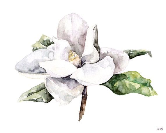 Magnolia painting watercolor flower watercolor painting magnolia painting watercolor flower watercolor painting white magnolia botanical print flower print flower print titled magnolia 4 mightylinksfo Images