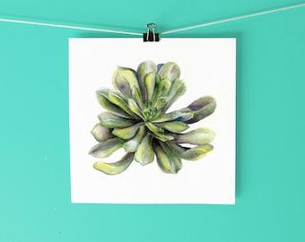 Succulent Art Print / Hand-drawn watercolor botanical illustration / Watercolor painting / Cactus art print