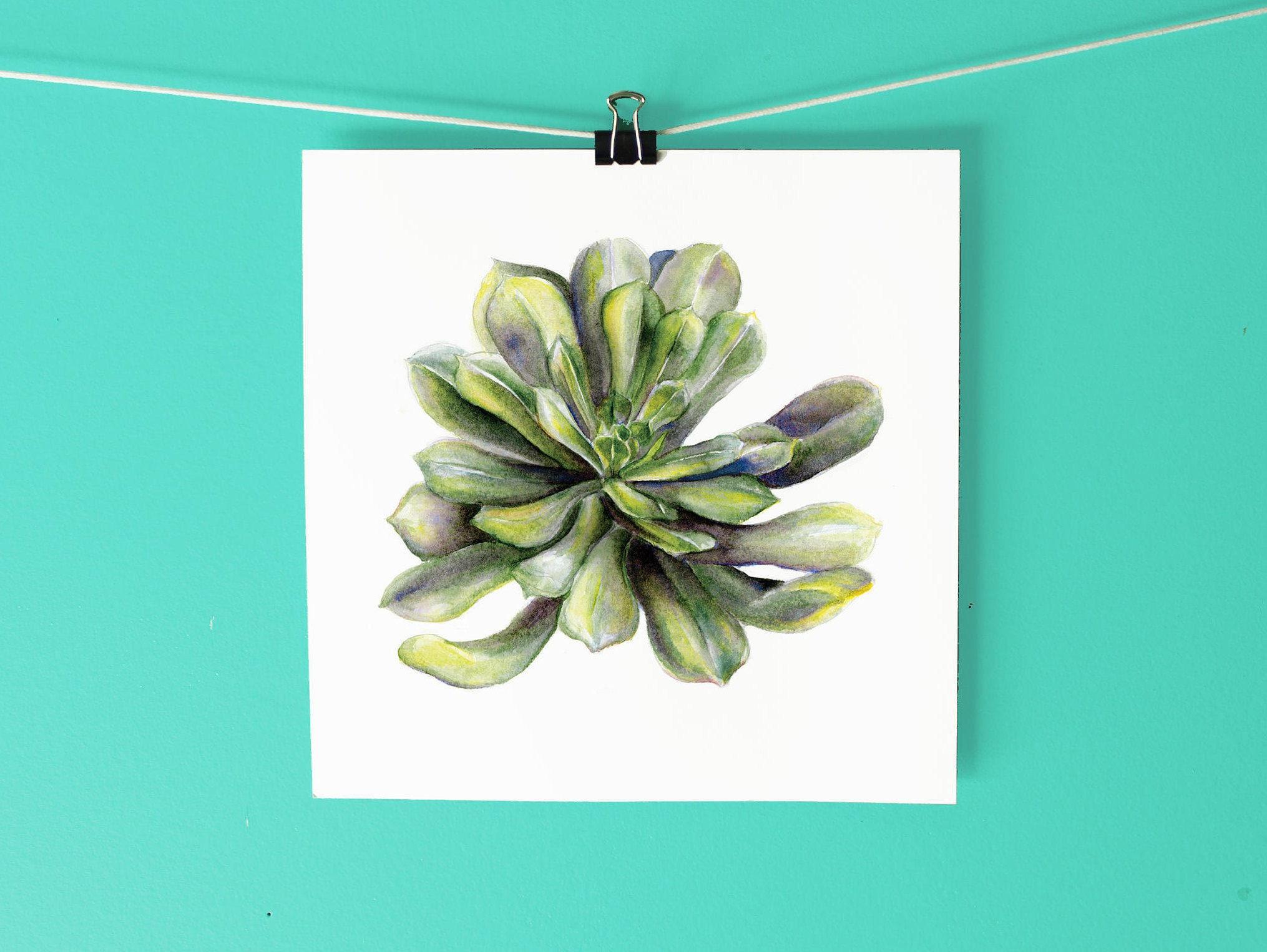 Saftige Art Print / handgezeichneten Aquarell botanische