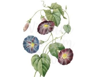 Floral Clipart Digital Download Botanical Clip Art for scrapbook, Card making, collage, prints - 1297
