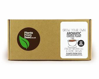 Grow Your Own Arabica Coffee Mini Plant Kit