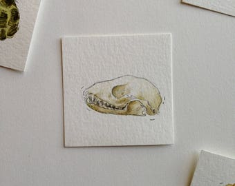 Raccoon Skull Treasure - Cabinet of Curiosities - Nature - Shadowbox Collection -  2x2 original watercolor illustration