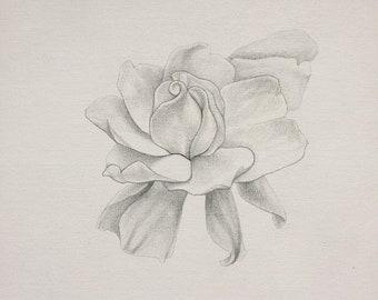 Gardenia Jasminoides Home Décor Drawing on 12x12 Canvas by artist Nicholas Michael