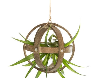 Wood Sphere with Air Plant