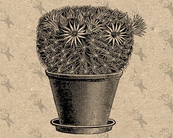 Vintage Image flowering Cactus Instant Download picture Digital printable clipart graphic transfer, burlap, iron on, decor etc HQ 300dpi