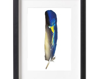 Blue and gold macaw painted on feather