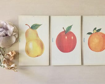 Vintage Flash Cards Set of 3- Large Size- 1960- Fruit