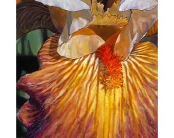 Original Painting | Floral Art Painting | Flower Painting | Wall Art | Like A Rainbow Bearded Iris