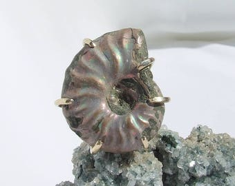 Ammonite ring, custom fossil ring, iridescent shell, raw stone, science jewelry, beach jewelry