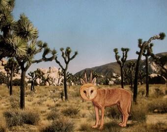 Wild Wolfowl in Joshua Tree, CA, Signed, 8x8 digital archival print