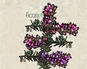 Heather, Tree Of Acceptance