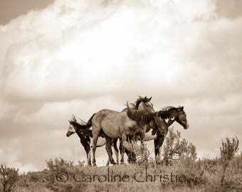 "Horse print,Wild Horse Photo, Horse Photography .Title ""Family"""