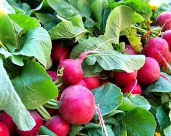Cherry Belle Seeds, Radish Seeds, Garden Seeds, Non-GMO Garden Seeds, Root vegetables, Salad Vegetables, Fall Planting Vegetables