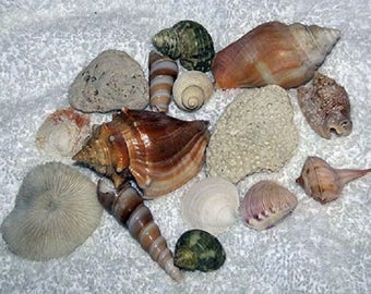 500 Assorted Sea Shells & Sea Items Mixed Lot