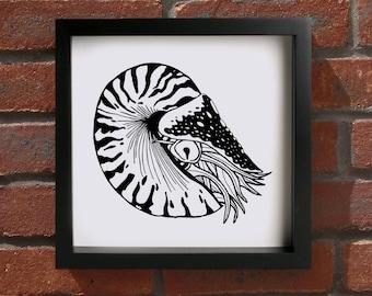 Chambered Nautilus - Giclee Print (Unframed)