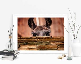 Llama Print, Animal Poster, Drama Llama, Quirky Wall Art, Home Decor, Digital Download, Farm Animal, Animal Print