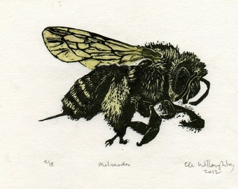 Melissodes Bee Linocut - Handprinted Fuzzy Bee - Bee Biodiversity Print Collection