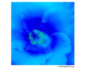 Blue Flower In Bloom, 5x5 photograph. Home Decor, Abstract, Fine Art, Wall Art