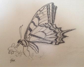 Swallowtail Butterfly Illustration - Original Pencil Illustration - Scientific Drawing - Butterfly Drawing - Biological Illustration