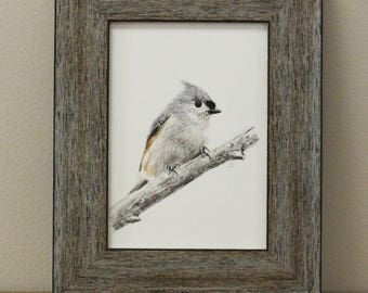 Watercolor Bird Art Print - Tufted Titmouse