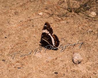 nature photography, BUTTERFLY, nature picture, stock butterfly, instant photo, wildlife photography, instant photos, Digital photograph