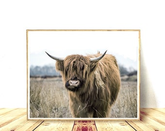 Hairy Cow, Printable Cow, Farm Animal Print, West Highland, Bull Photo, Rural Photography, Rustic Home Decor, Cattle Decor, Digital Download