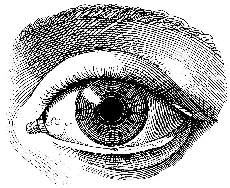 Vintage Globe Line Drawing : The human eye old medical atlas illustration digital image