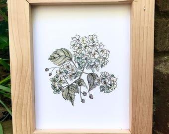Watercolor Hydrangea, Watercolor print, Hydrangea Illustration, Watercolor Floral Illustration