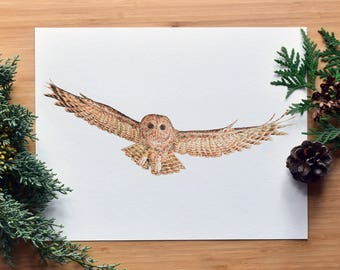 Spotted Owl Fine Art Watercolor Print