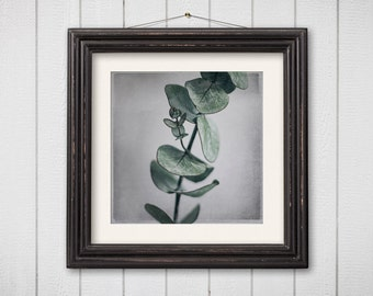 Still Life Photography Eucalyptus Green Square 5x5 8x8 Botanical Print Nature Photography Macro