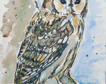 Tawny owl art watercolour painting, original wildlife painting, bird art, an original watercolour painting of a tawny owl by EdieBrae
