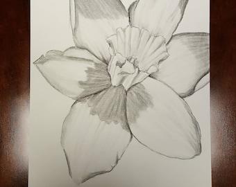Original Daffodil Flower Charcoal Drawing