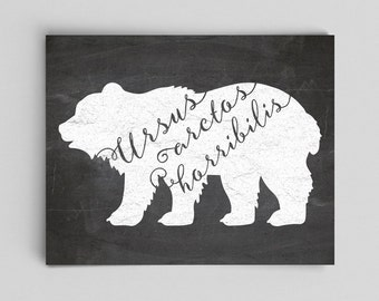 Grizzly Bear Art Bear Print Scientific Illustration Typographic Print Typography Print Science Poster Grizzly Bear Print Chalkboard Print