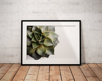 Succulent | Botanical | Plant | Photo Print