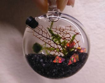 Marimo and Christmas Moss Terrarium Locket - Live Plant Jewelry - Red Rainbow Opal