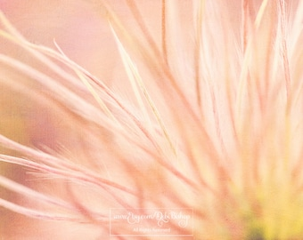 Fine Art Nature Photography Print-Abstract Floral -Pasque Flower Dried -Soft Fluffy Pink Dreamy -Home & Nursery Decor -Living Room Wall Art