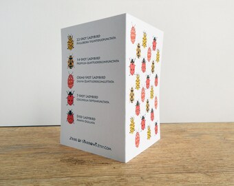 Loveliness of Ladybirds Card