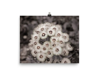 Dandelion photography Black and white photography Black and white wall art Photo print