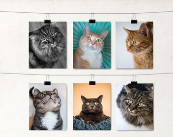 Meow Cat Notecards, 6 Blank Greeting Cards, Shelter Cats Photos