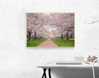 Pink Cherry Blossom Photograph Print, Cherry Blossom Photography Print, Cherry Blossom Print, Flower Photo, Nature Photography, Nature Print