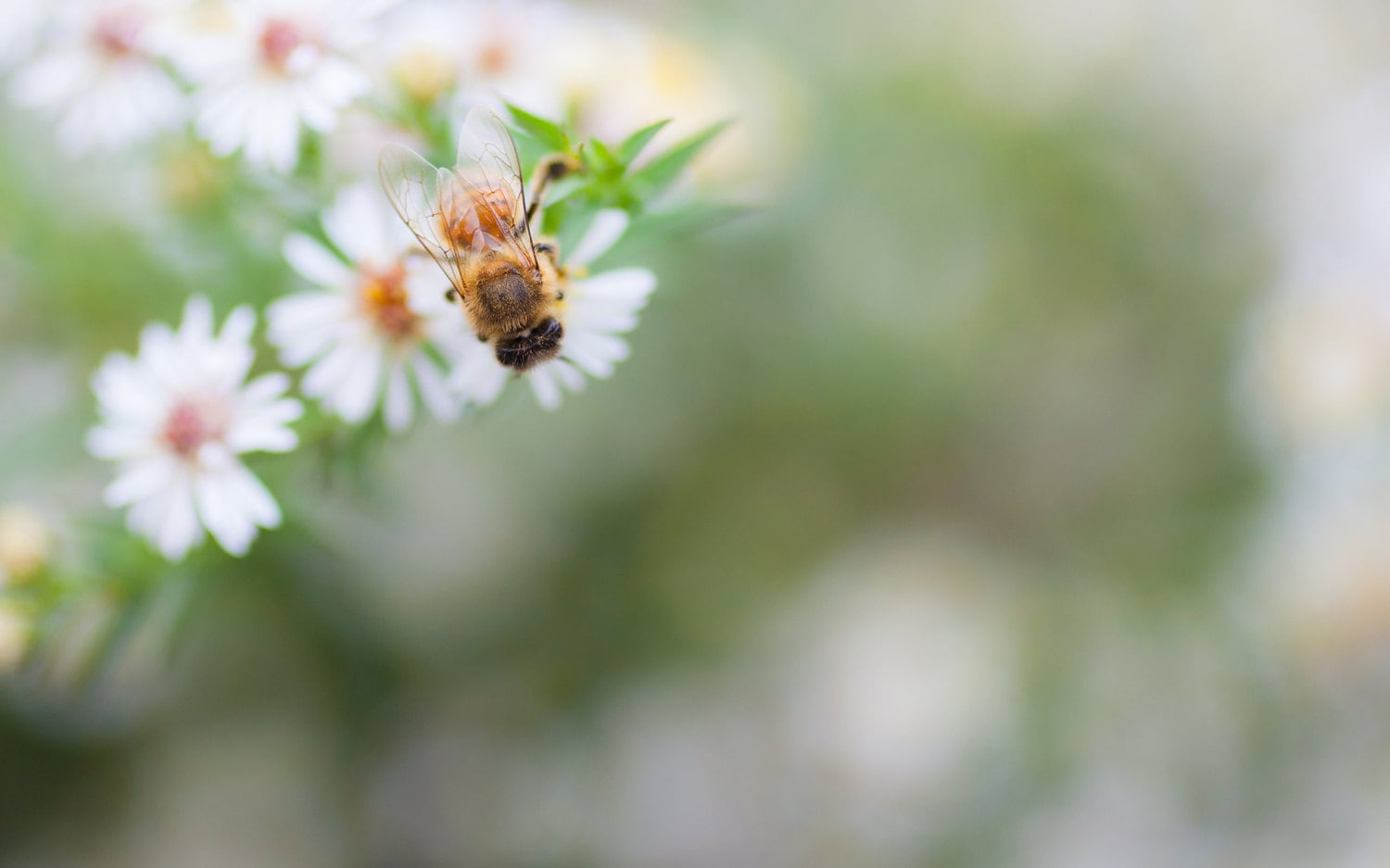 Floral Photography Print Honey Bee Photography Bee Photo