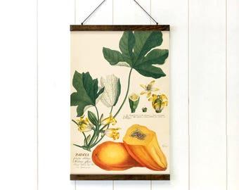 Papaya botanical print pull down chart Reproduction botanical chart Wooden poster hanger Tropical fruit wall art for kitchen Papaya diagram