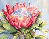"Notecard ""Protea"" by Sandi McGuire"