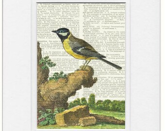 bird VI dictionary page print