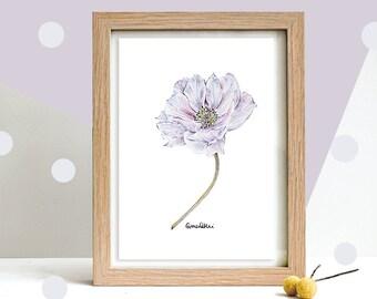 Botanical Art, Drawing of an Anemone Flower in Purple | Original Pencil Art