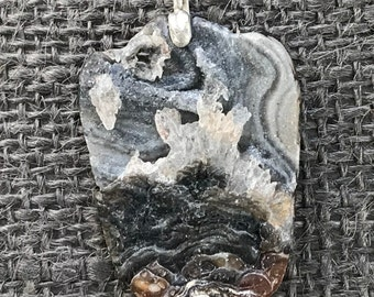 Florida fossil shall in calcite