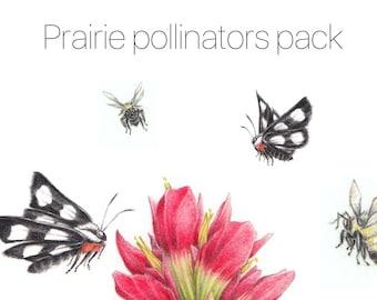 Prairie Pollinators Card Set